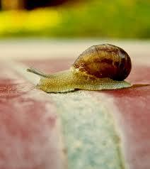 snail crossing finish line