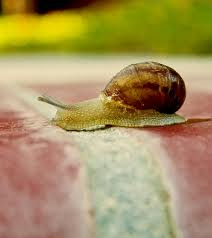 snail crossing finish line